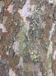 Tree bark, Queens Park