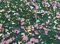 Autumn leaves, Queens Park
